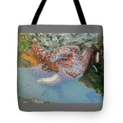 Starfish Sandwhich Tote Bag