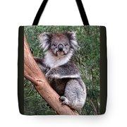 Staring Koala Tote Bag