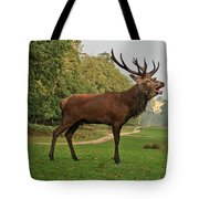 Stately Stag Tote Bag