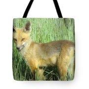 Steamboat Fox Tote Bag