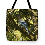 Stellar Jay 2 Tote Bag
