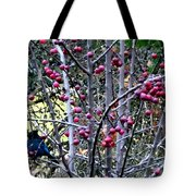 Stellar Jay In Crab Apples Tote Bag by Will Borden