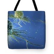 Stem Cells Tote Bag