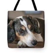 Stewie - Family Dog Tote Bag