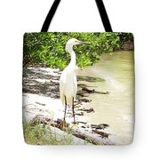 Still Looking For Lunch Gp Tote Bag