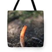 Stinkhorn And Flies Feeding Tote Bag