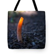 Stinkhorn Fungus With Fly Feeding Tote Bag