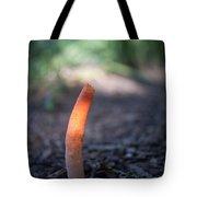 Stinkhorn In Sunlight Beam Tote Bag