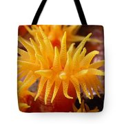 Stony Cup Coral Tote Bag