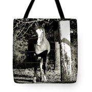 Stopping For A Pose - Southern Indiana Tote Bag