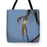 Strand Of Moss Swaying Gently With The Wind - Tiger Mountain Wa Tote Bag