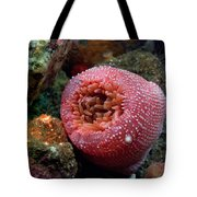 Strawberry Tote Bag by Kenneth Hadlock