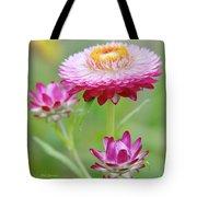 Strawflower Blossoms Tote Bag