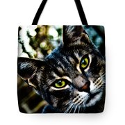 Street Cat II Tote Bag