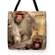 Kathmandu Street Monkeys  Tote Bag