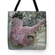 Stretched Starfish Tote Bag