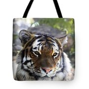 Striped Beauty Tote Bag