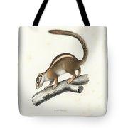 Striped Bush Squirrel, Paraxerus Flavovittis Tote Bag