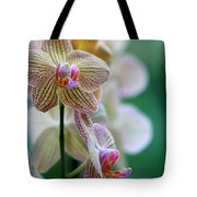 Striped Orchid 1 Tote Bag