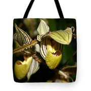 Striped Orchid Tote Bag