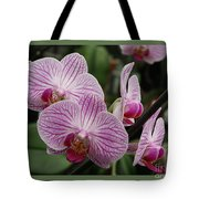 Striped Orchids With Border Tote Bag