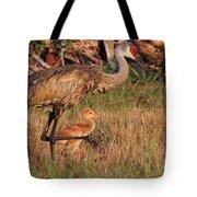 Strolling Sandhill Crane Family Tote Bag