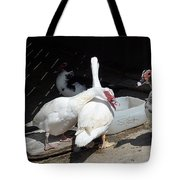 Stubbs On Lanzarote Tote Bag