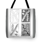 Study In Arrowheads Tote Bag