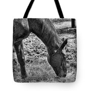 Study Of A Horse Tote Bag