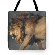 Study Of A Lion Tote Bag