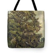 Study Of An Ash Tree Tote Bag