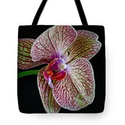 Study Of An Orchid 2 Tote Bag