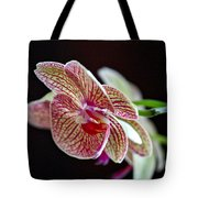 Study Of An Orchid 3 Tote Bag