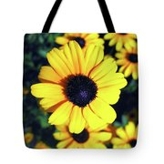 Stunning Black Eyed Susan  Tote Bag