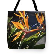Stunning Bunch Of Flowers With Bright Orange Petals  Tote Bag
