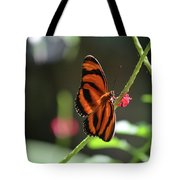Stunning Little Orange Oak Tiger Butterfly In Nature Tote Bag