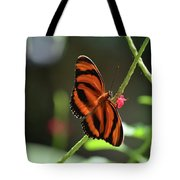 Stunning Oak Tiger Butterfly Resting On Flowers Tote Bag