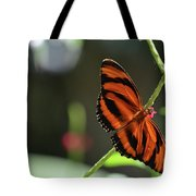 Stunning Orange And Black Oak Tiger Butterfly In Nature Tote Bag