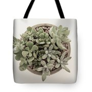 Succulent Plant From The Top Tote Bag