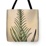 Sugar Cane, 1597 Tote Bag