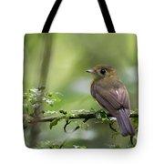 Sulphur-rumped Flycatcher Tote Bag