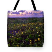 Summer Beach Daisies 1 Tote Bag