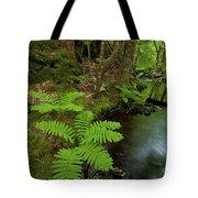 Summer Brook Tote Bag