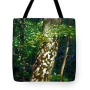 Sun And Shadow Patterns Tote Bag