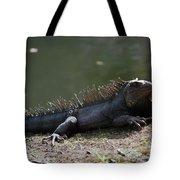 Sun Bathing Iguana Beside A Body Of Water Tote Bag