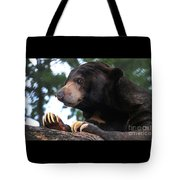 Sun Bear-7859 Tote Bag