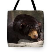 Sun Bear Tote Bag
