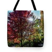 Sun Burst In Autumn Tote Bag