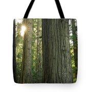 Sun In The Cedars Tote Bag
