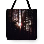 Sun In The Forest  Tote Bag
